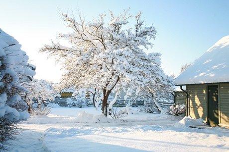 gartenarbeiten-im-winter